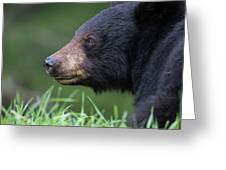 Black Bear Amongst The Grass Greeting Card