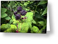 Black Raspberries  Greeting Card