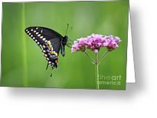 Black Swallowtail Balance Greeting Card