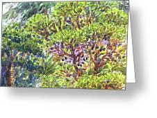 Blake Garden, Berkeley Ca Greeting Card by Judith Kunzle