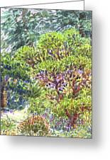 Blake Garden, Berkeley Ca Greeting Card