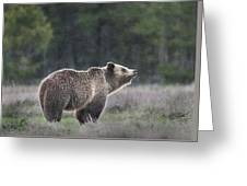 Blondie The Bear Greeting Card