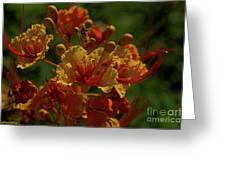 Blooming Away Greeting Card