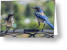 Blu And Blu2 Greeting Card