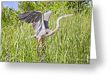Blue Heron On The Rise Greeting Card