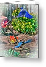 Bluejays Landing San Pedro Greeting Card