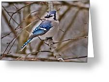 Bluiejay Greeting Card