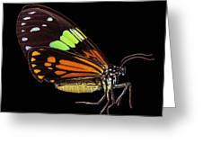 Boisduval's Tiger Moth Greeting Card
