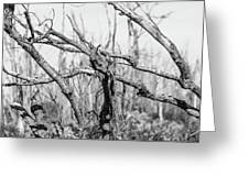Branches In Black And White Greeting Card