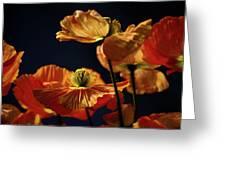 Bright Orange Poppies Greeting Card
