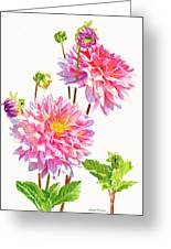 Bright Pink Dahlias With Buds Greeting Card