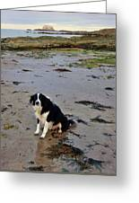 Brodie And Bass Rock Greeting Card