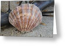 Brown Cockle Shell And Driftwood 2 Greeting Card