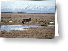 Brown Icelandic Horse In Profile Near Stream Greeting Card