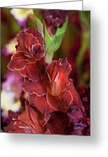 Brown Jewel 5. The Beauty Of Gladiolus Greeting Card