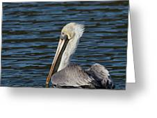Brown Pelican Greeting Card by Jemmy Archer