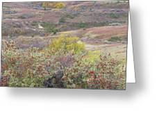 Buffaloberry Prairie Greeting Card