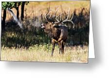 Bull Elk 3068 Greeting Card