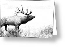 Bull Elk In Rut Greeting Card