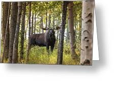 Bull Moose In Fall Forest Greeting Card