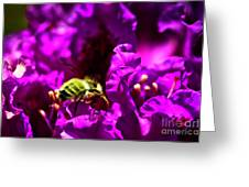 Bumble Bee On A Rhodedendron  Greeting Card