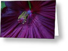 Burgundy Hibiscus Greeting Card