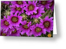 Burst Of Fuchsia Cactus Flowers Greeting Card
