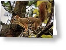 Bushy Tailed  Greeting Card