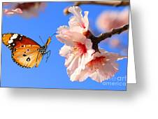 Butterfly And Pink Almond Tree Blossom Greeting Card
