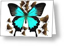 Butterfly Patterns 25 Greeting Card