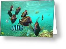 Butterflyfish And Sergeant Major Greeting Card