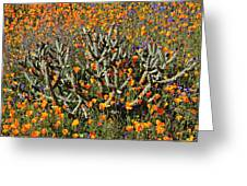 Cactus Poppies And Bluebells Greeting Card