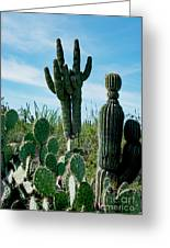 Cactus Twins Have Company Greeting Card