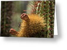 Cactus With Beetle Greeting Card