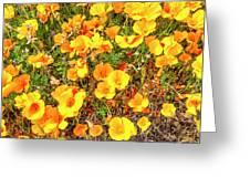 California Poppies - 2019 #3 Greeting Card