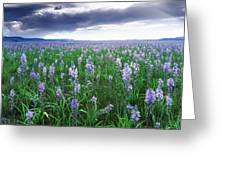 Camas Marsh 2 Greeting Card