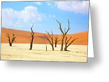 Camel Thorn Trees In Sossusvlei, Namibia Greeting Card