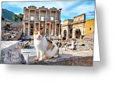 Cat In Front Of The Library Of Celsus Greeting Card