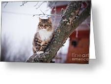 Cat Outdoors In The Winter Is On The Greeting Card