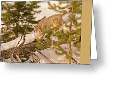 Cat Walk Greeting Card