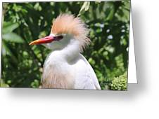 Cattle Egret Profile Greeting Card