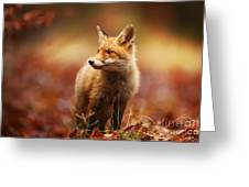 Cautious Fox Stopped At The Edge Of The Greeting Card