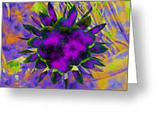 Cereusly Solarized Greeting Card