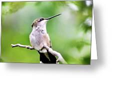 Charming Hummingbird Square Greeting Card