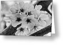 Cherry Blossoms 2019 E Greeting Card