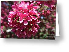 Cherry Blossoms 2019 Iv Greeting Card