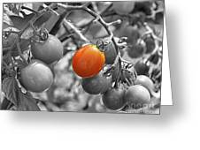 Cherry Tomatoes Partial Color Greeting Card