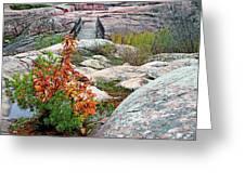 Chikanishing Trail Boardwalk Greeting Card