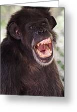 Chimp With Mouth Open Greeting Card