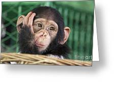 Chimpanzee Face Greeting Card